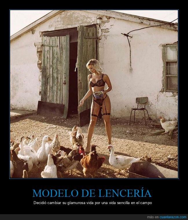 gallinas,modelo,wtf