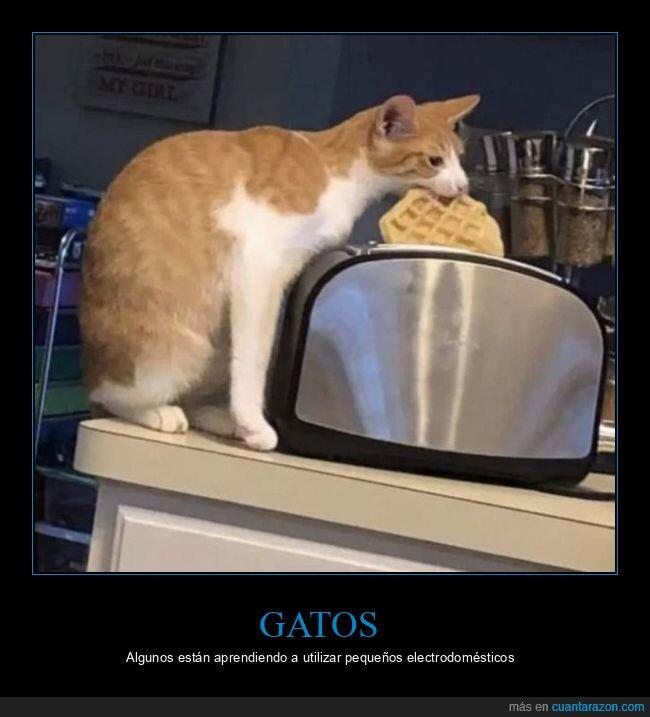gato,gofre,tostadora