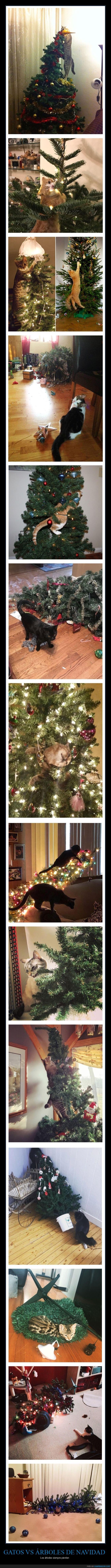 árboles de navidad,gatos