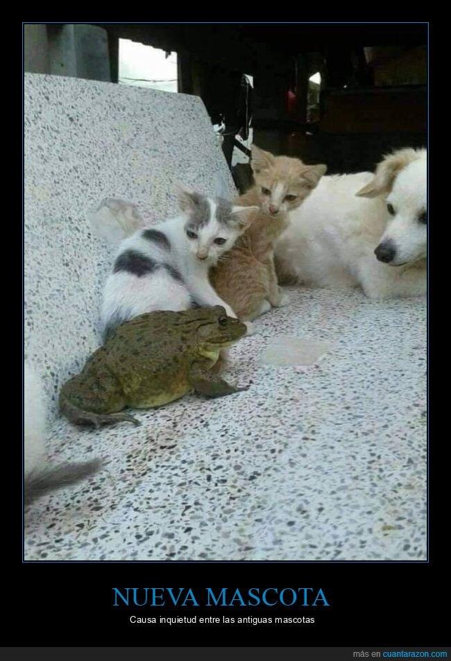 gatos,perro,rana,wtf