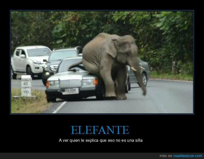coche,elefante,sentado
