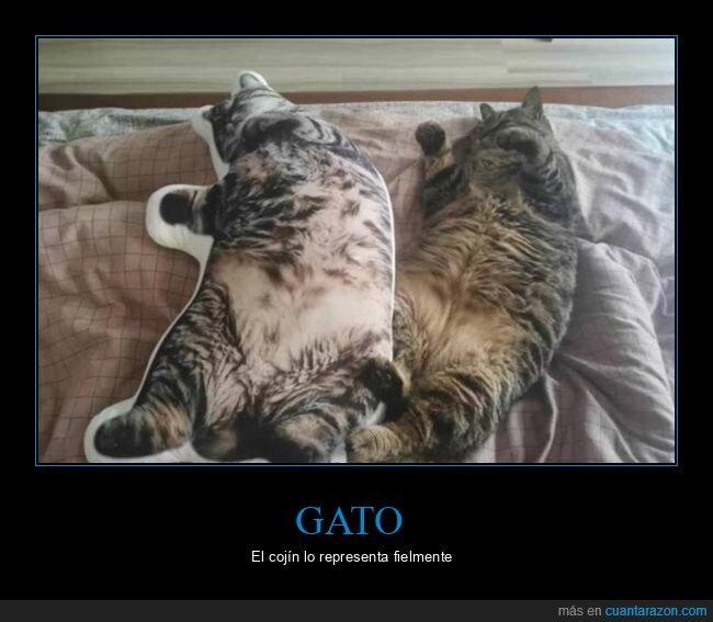 cojín,gato,parecidos
