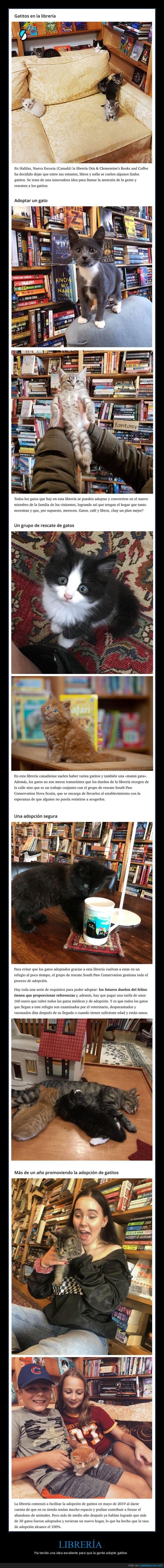 adoptar,gatos,libreria