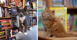 Enlace a Una librería ha tenido una idea excelente para que la gente adopte gatitos