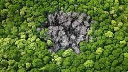 Enlace a Cicatriz forestal