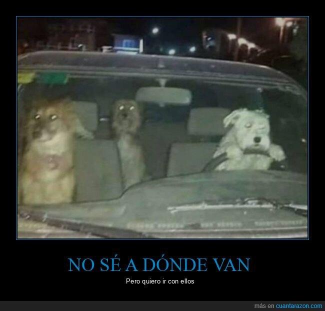 coche,perros,wtf