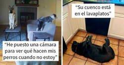 """Enlace a """"¿Qué le pasa a tu perro?"""": La gente publica imágenes de perros funcionando mal"""