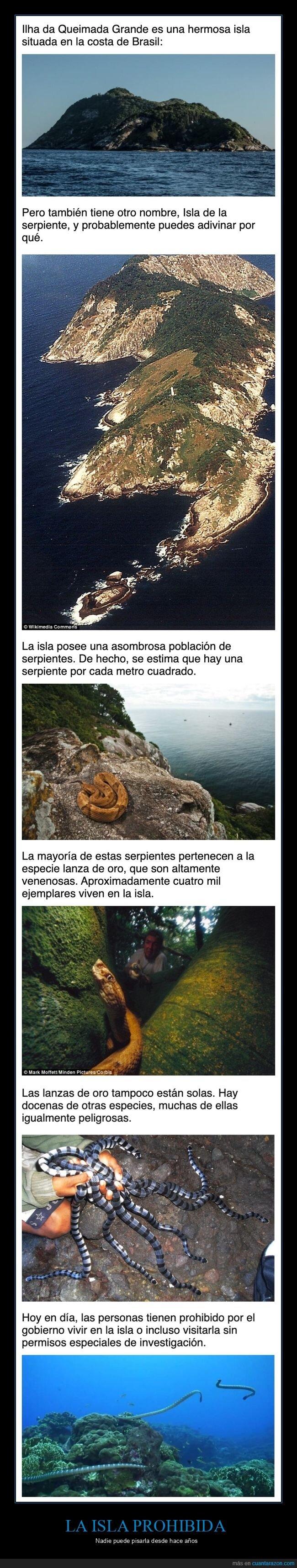 isla,prohibida,serpientes