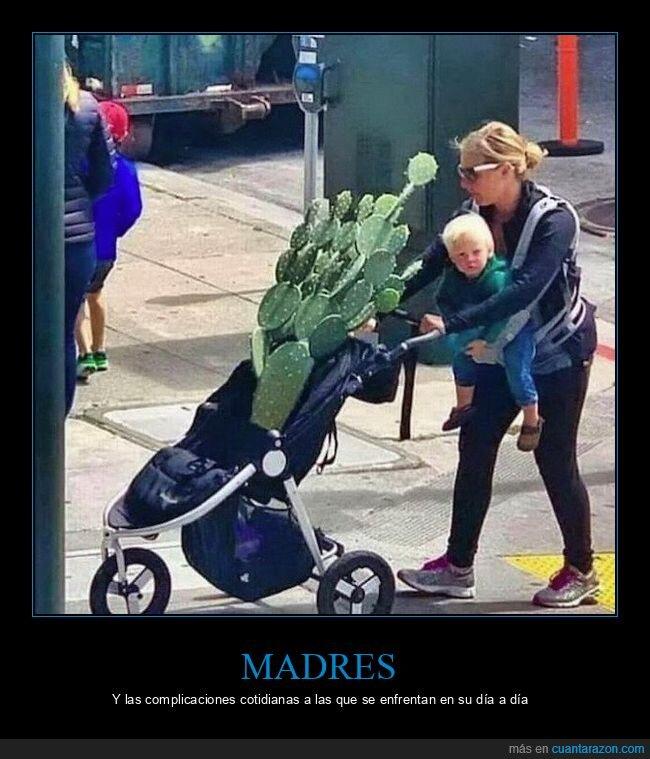cactus,carrito,madre,wtf