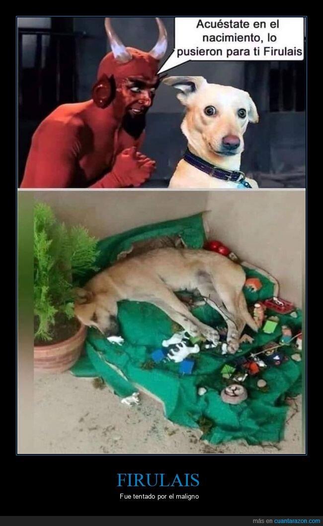 belén,fails,perros