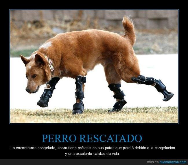 congelado,patas,perro,prótesis