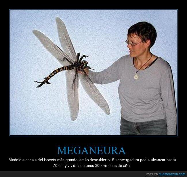 gigante,insecto,meganeura