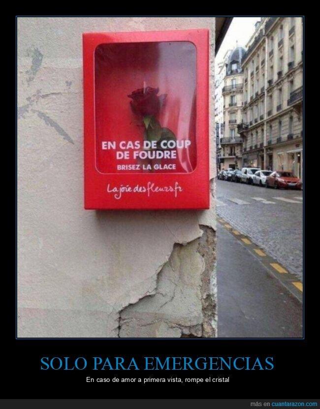 amor,cristal,emergencia,romper,rosa