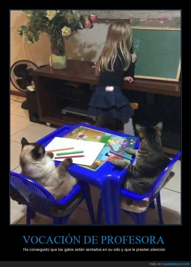 gatos,niña,profesora,vocación