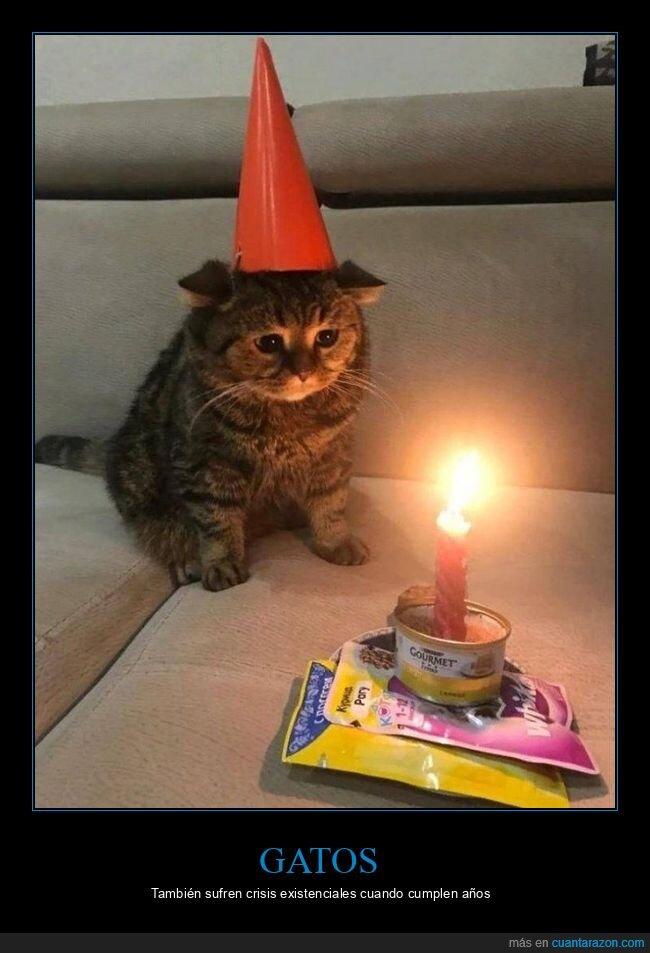cumpleaños,gato
