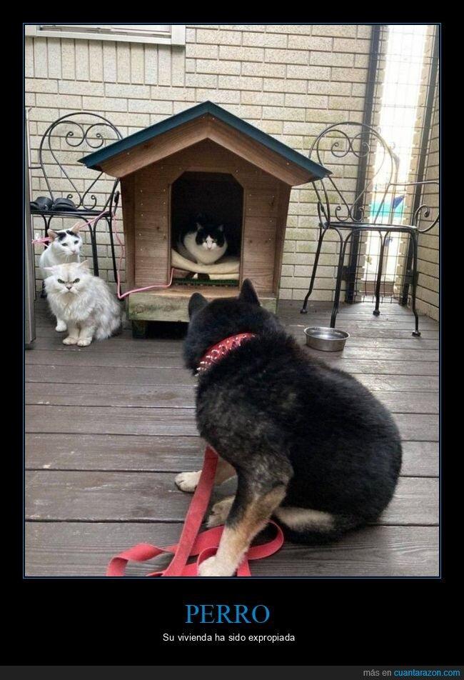caseta,gatos,perro