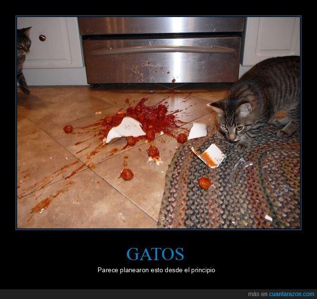 comida,gatos,plato