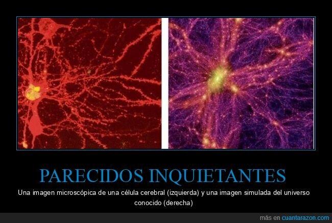 célula cerebral,parecidos,universo