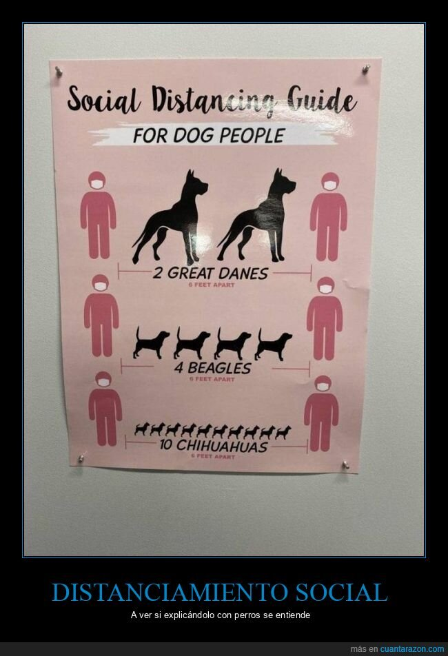 distanciamiento social,perros