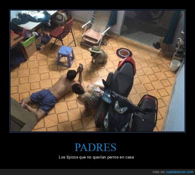 padres,perro
