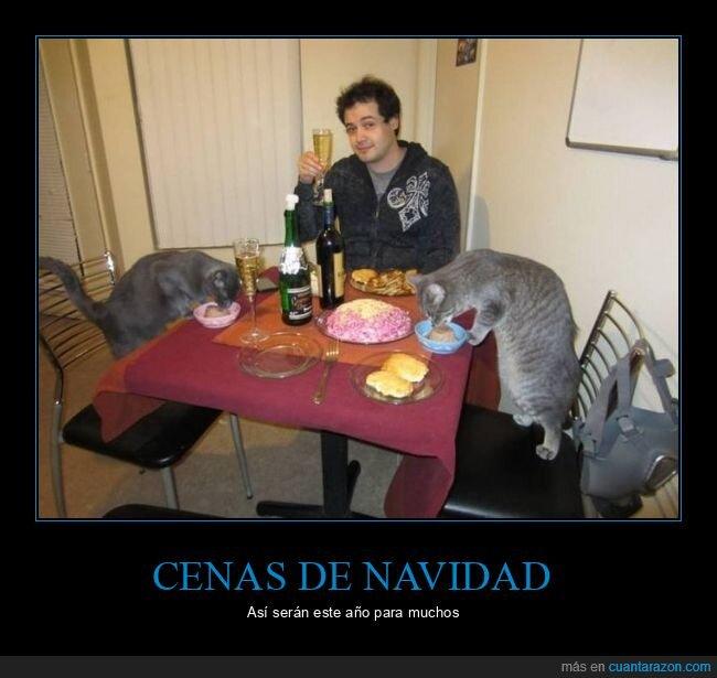 cena de navidad,gatos