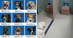 Enlace a Estos investigadores intentaron identificar cómo se reconocen los perros entre ellos