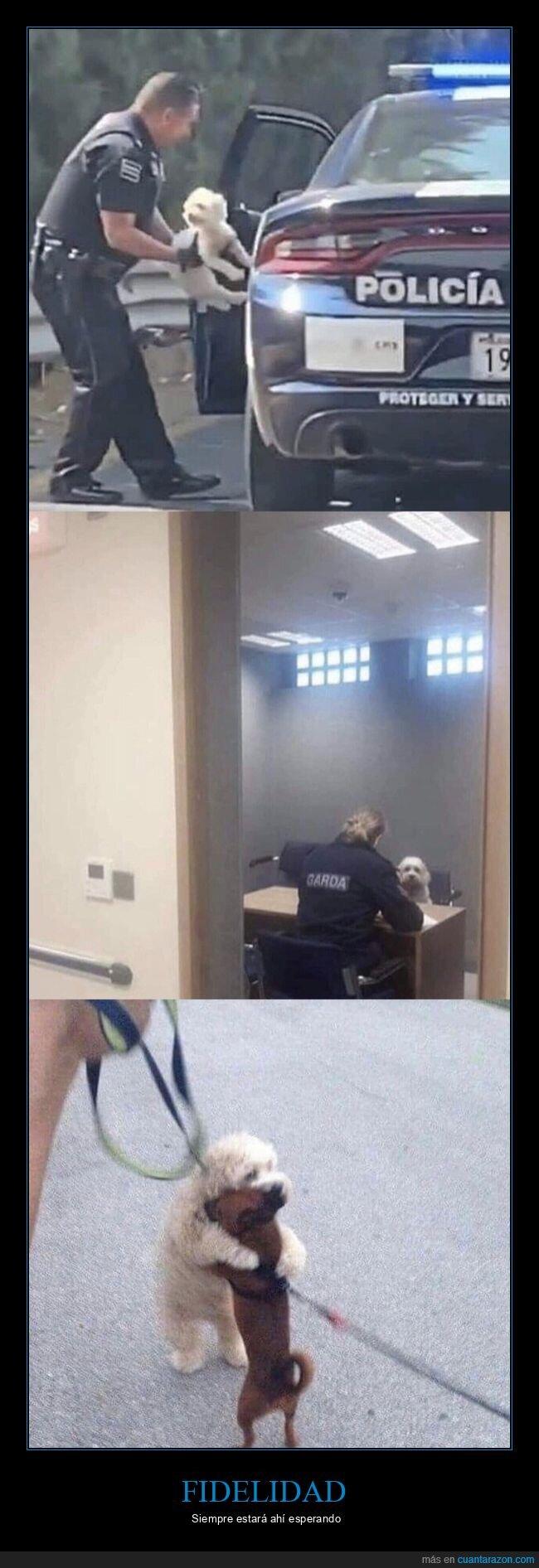 abrazo,cárcel,perro,salir