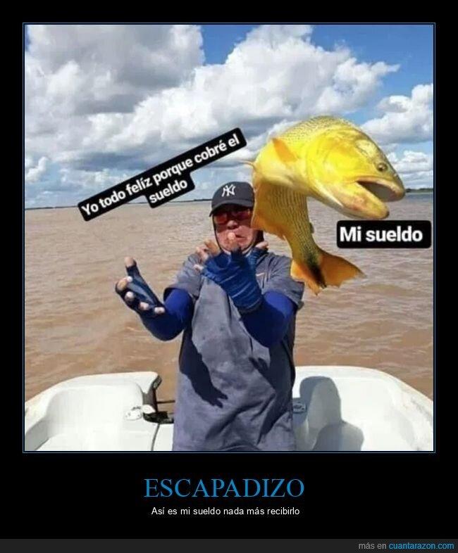 escapar,pe,pescado,sueldo