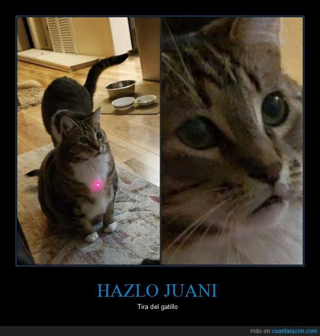 gato,laser,puntero