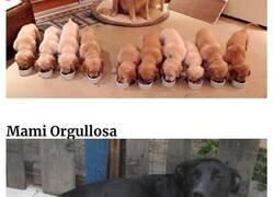 Enlace a Madres posando orgullosas con sus cachorros