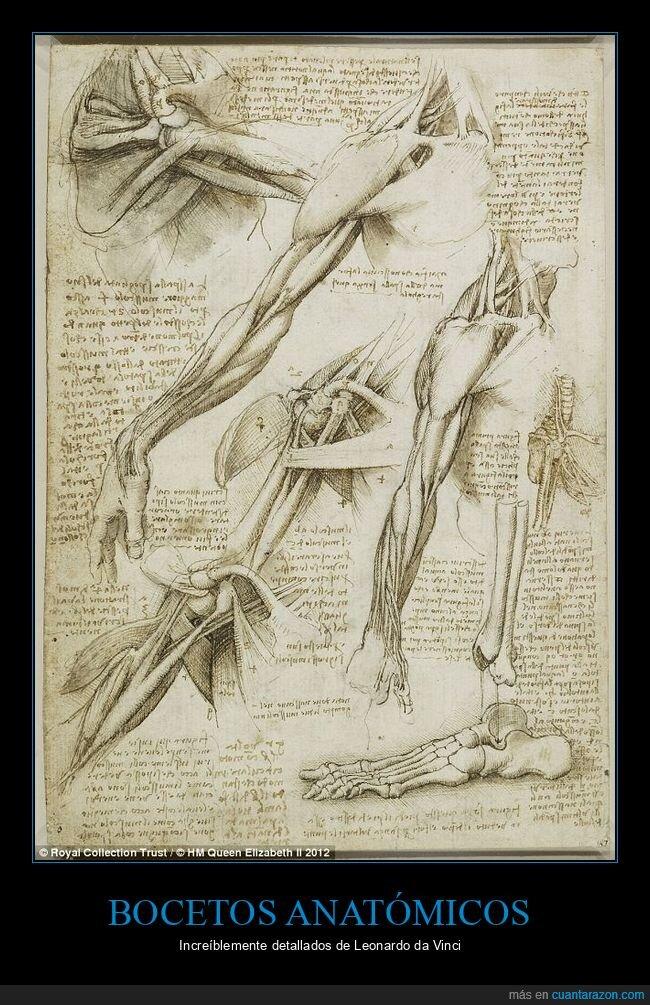 bocetos anatómicos,leonardo da vinci