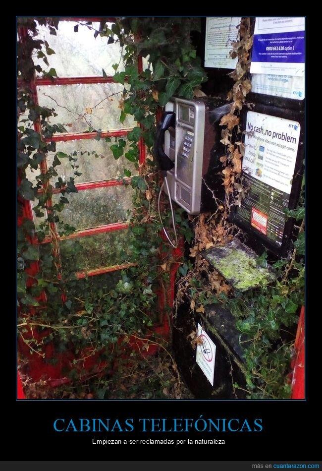abandonada,cabina telefónica,naturaleza