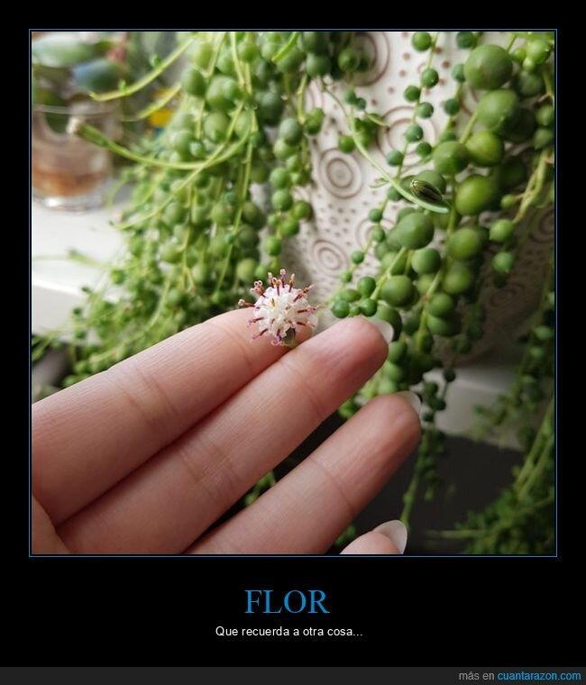 coronavirus,flor