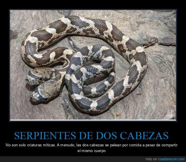 dos cabezas,serpiente