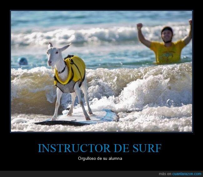 cabra,surf,wtf