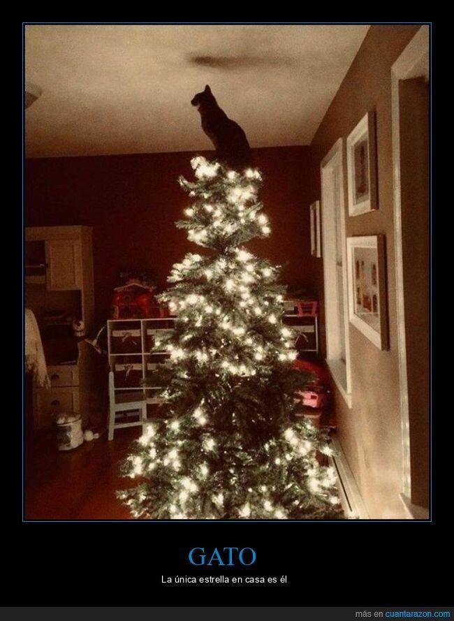 árbol de navidad,estrella,gato
