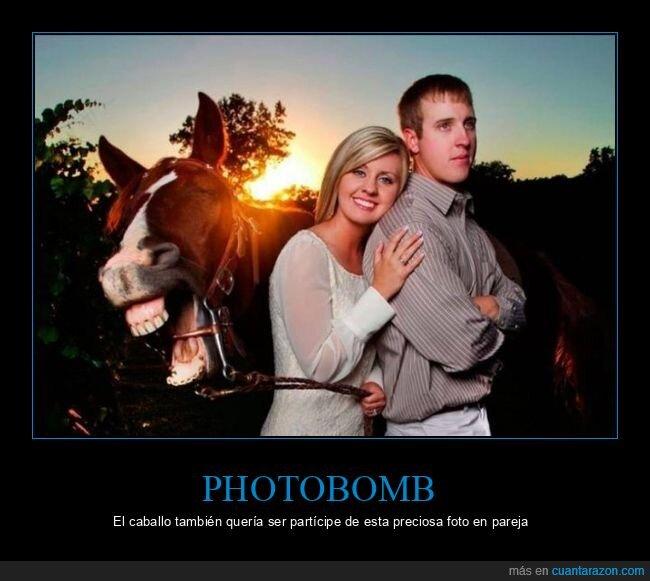 caballo,pareja,photobomb