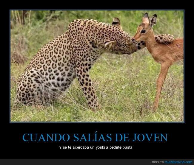 ciervo,leopardo,pedir,salir,yonki