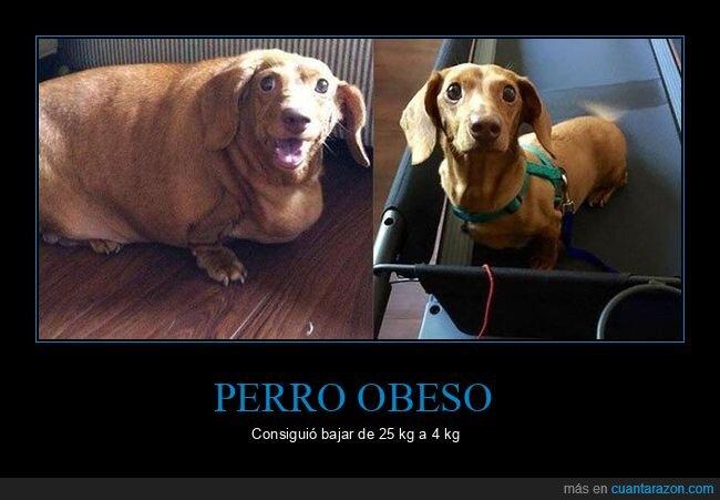 adelgazar,obeso,perros,peso