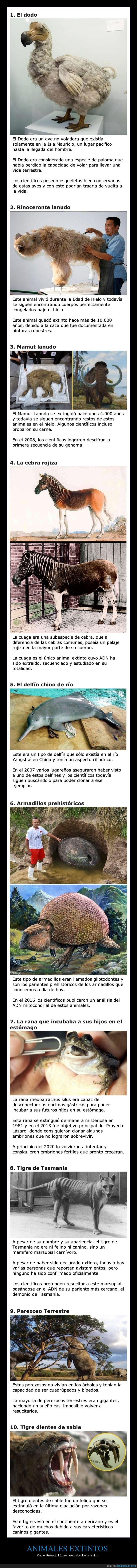 animales,extintos,proyecto lázaro