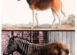 Enlace a Animales extintos que el Proyecto Lázaro quiere devolver a la vida