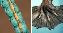 Enlace a Los animales con las patas más extrañas del mundo