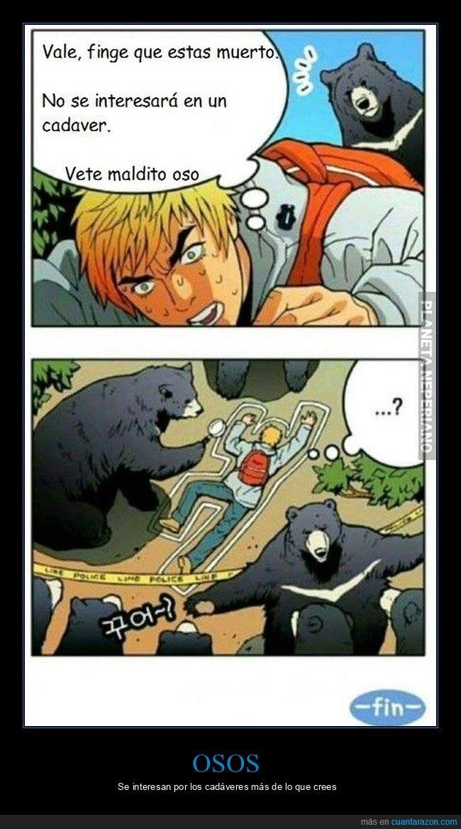 hacerse el muerto,osos