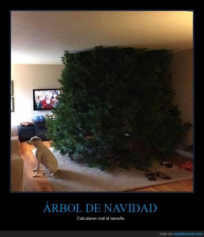 árbol de navidad,gigante,tamaño