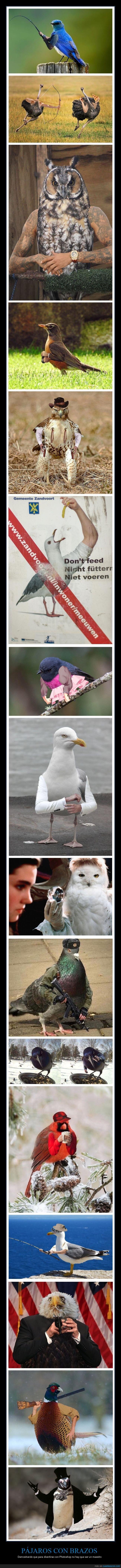 brazos,pájaros