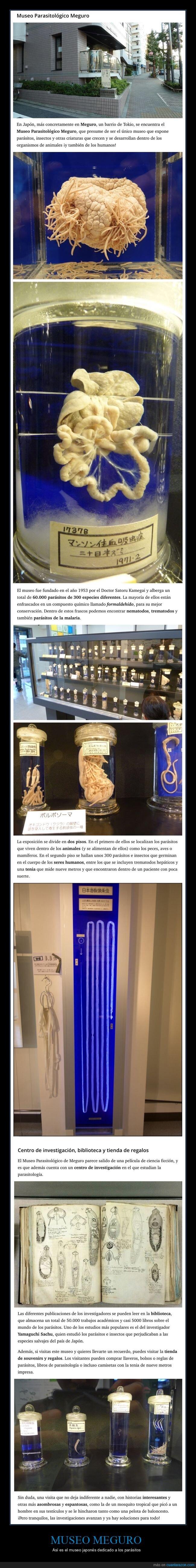 japón,museo,parásitos