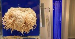 Enlace a Así es el museo japonés dedicado a los parásitos
