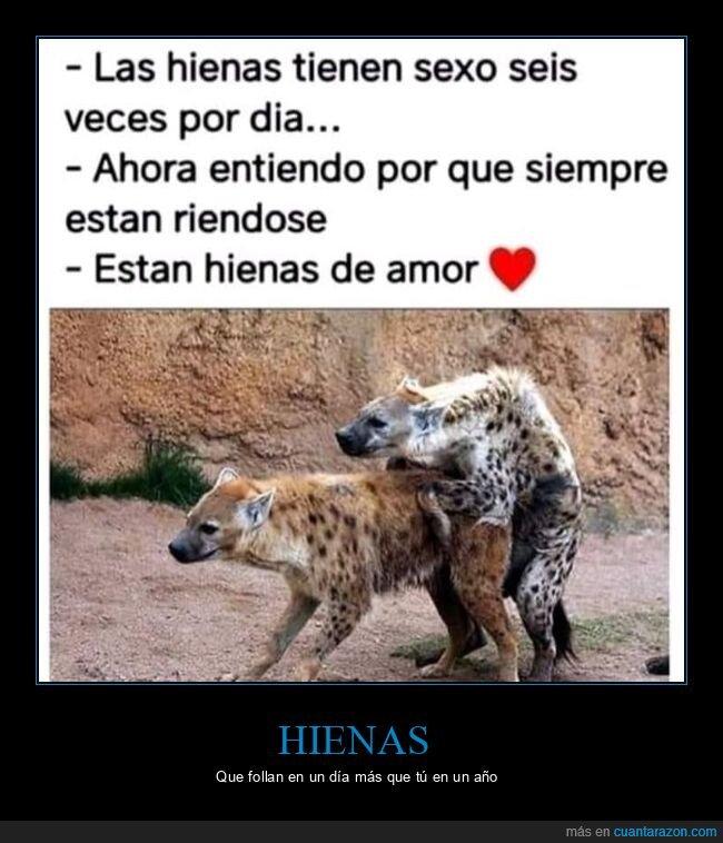amor,hienas,reír