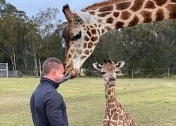 Enlace a Amor de jirafa