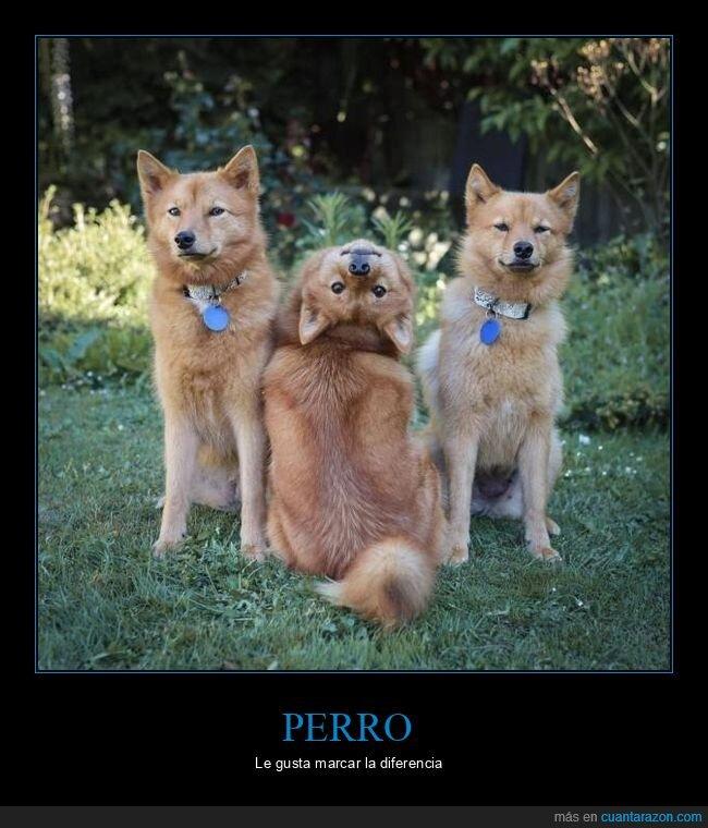 cabeza,perro,posando,wtf